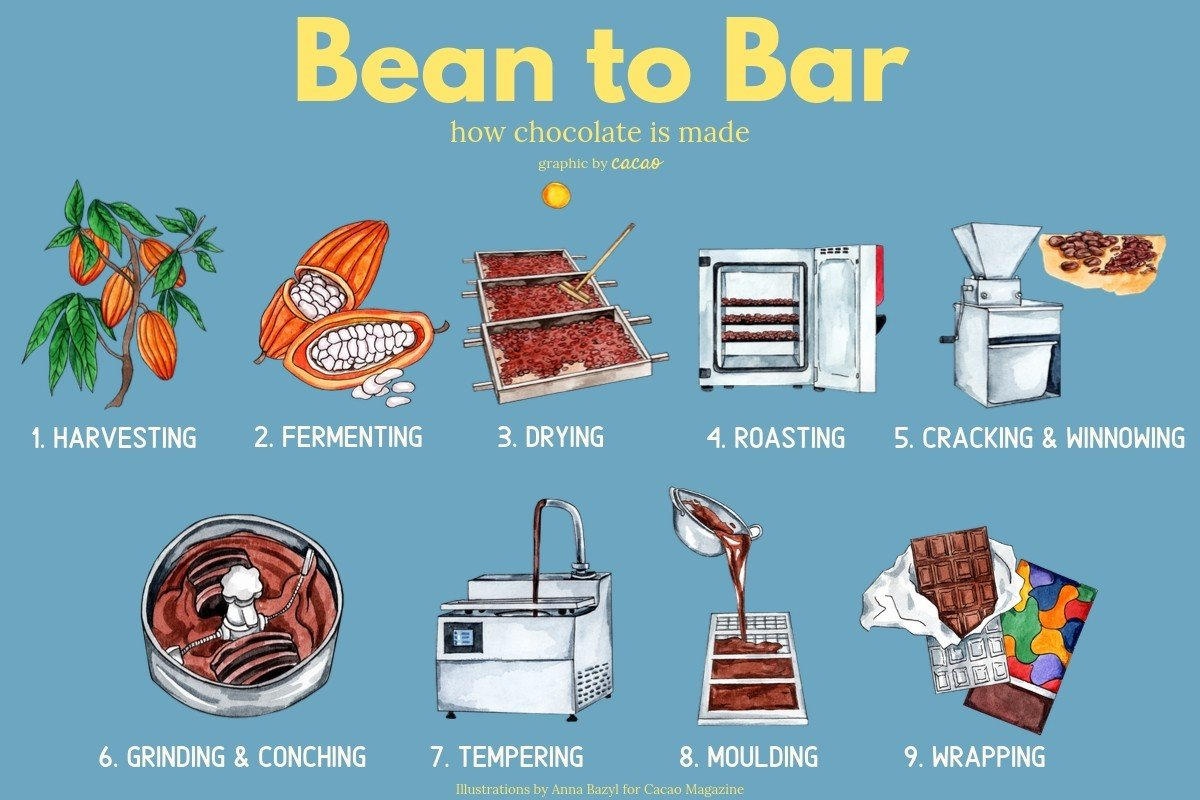 Bean to Bar process diagram