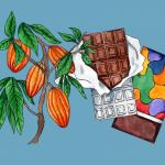 bean to bar chocolate how chocolate is made