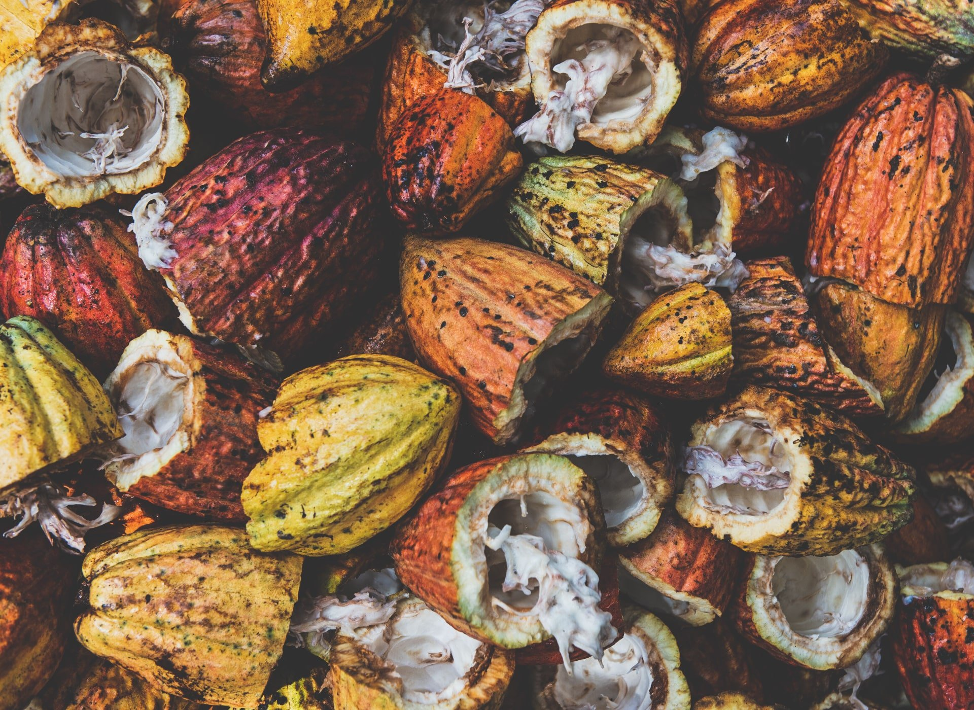 cacao waste