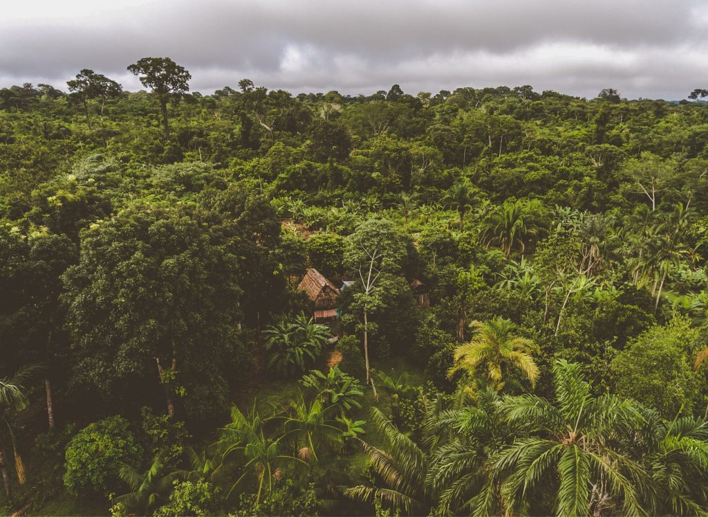 cacao agroforestry